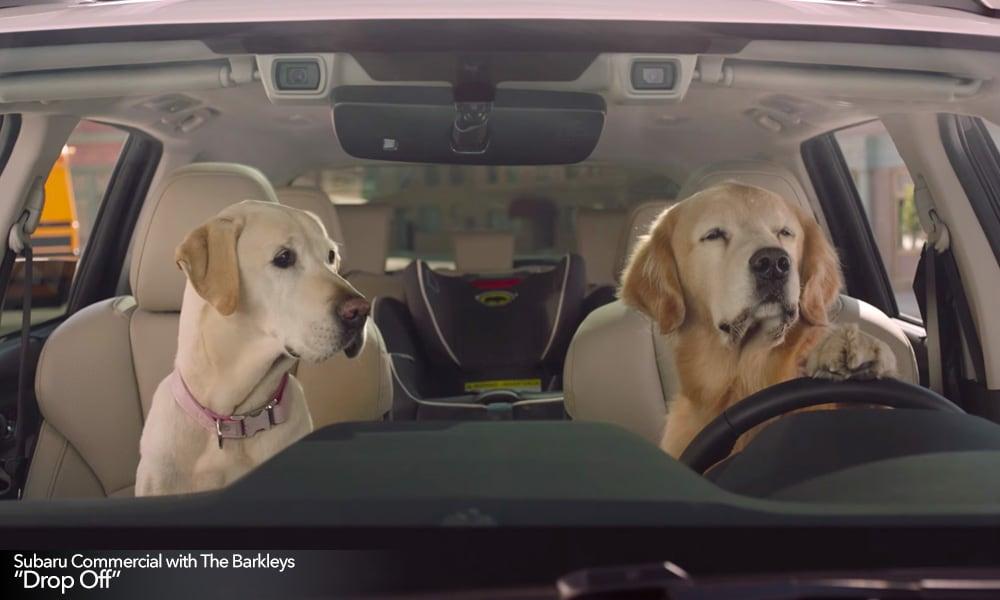 new subaru tv commercials feature the barkleys goldstein subaru blog